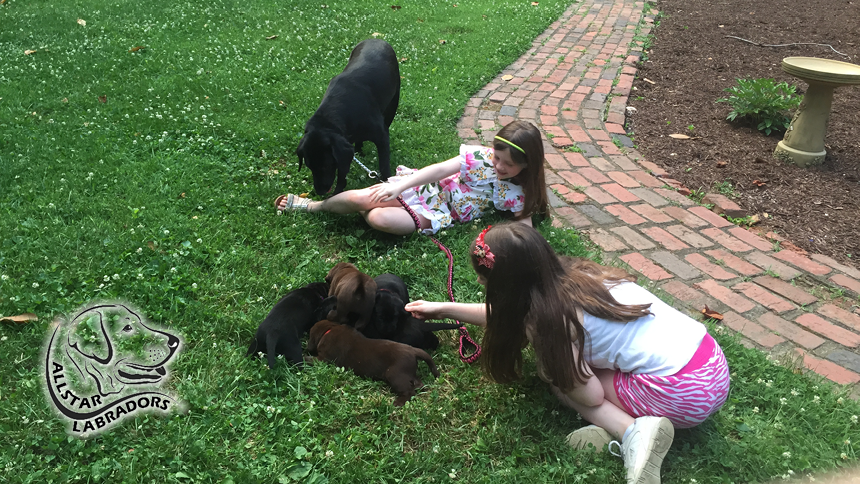 Puppy Pics 860-484-19