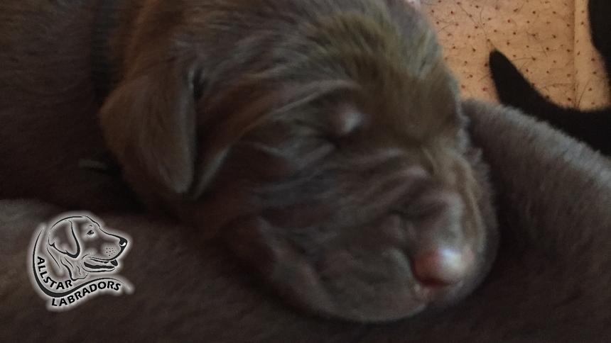 Puppy Pics 860-484-9