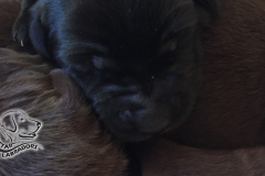 Puppy Pics 860-484-11