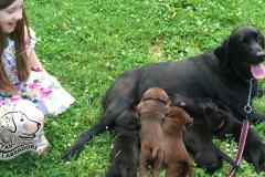 Puppy Pics 860-484-17