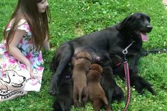 Puppy Pics 860-484-18