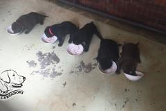 Puppy Pics 860-484-23