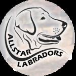 Allstar Labradors Logo